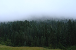 Another pic of the fog and trees