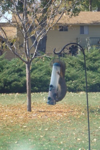 Like hanging upside down on a birdfeeder and eating seed through a tiny hole.