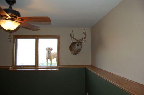 basement ledge